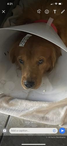 Lost Male Dog last seen Campbell, Tucson, AZ 85747