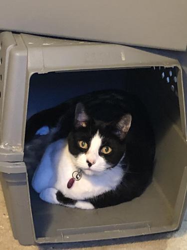 Lost Female Cat last seen Backyard of 21 Little Falls rd, Cedar Grove, NJ 07009