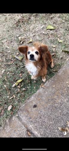 Lost Male Dog last seen Near HI-Ho ballroom in Grand Prairie Tx , Grand Prairie, TX 75051