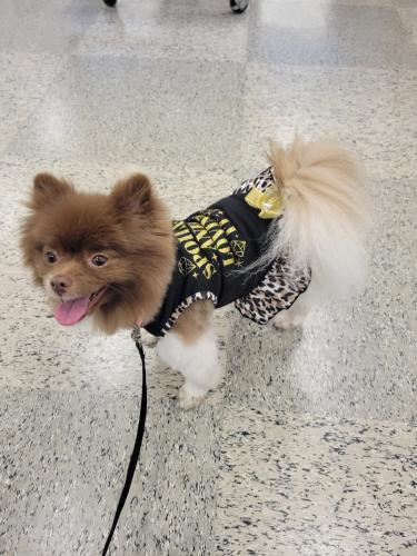 Lost Female Dog last seen Near SW 10th street , Pompano Beach, FL 33060