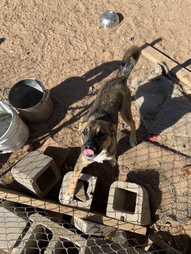 Lost Male Dog last seen Near S Grant Ave Odessa, TX  79761 United States, Odessa, TX 79761