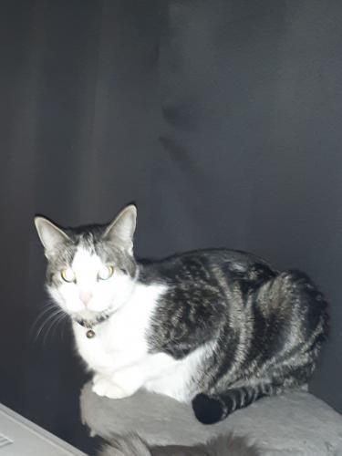 Lost Male Cat last seen Sundance Kid, Edgewood, NM 87015