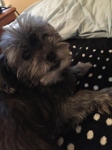 Lost Male Dog last seen Rosebriar drive durham NC , Durham, NC 27705