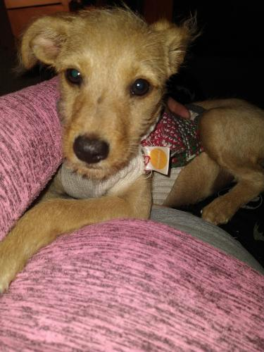 Found/Stray Female Dog last seen Florida / Stanford, Hemet, CA 92544