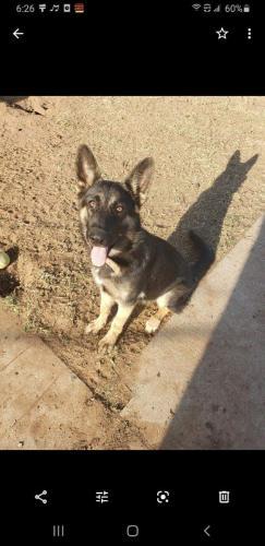 Lost Female Dog last seen Near brand  in Midland , Midland, TX 79701