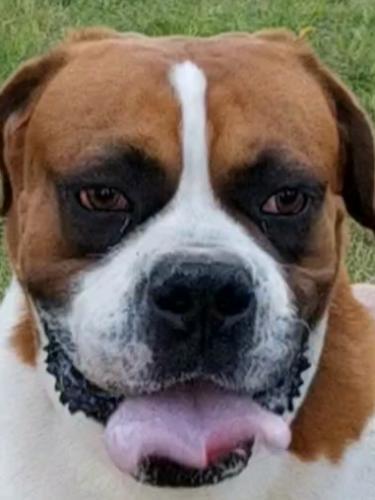Found/Stray Unknown Dog last seen Alpine and 56th St, Mesa, AZ 85206