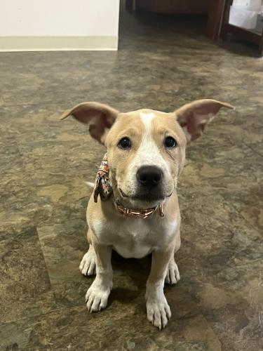 Found/Stray Female Dog last seen Verdugo Rd & Crestmoore Pl, Los Angeles, CA 90065