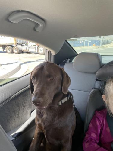 Lost Female Dog last seen E mill st , San Bernardino, CA 92408