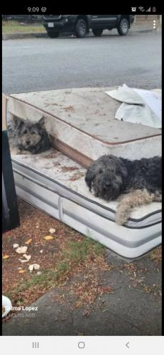Found/Stray Unknown Dog last seen Near Compton Court hse , Compton, CA 90220