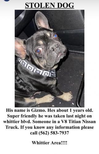 Lost Male Dog last seen Whittier / Broadway and lambert /painter, Whittier, CA 90602