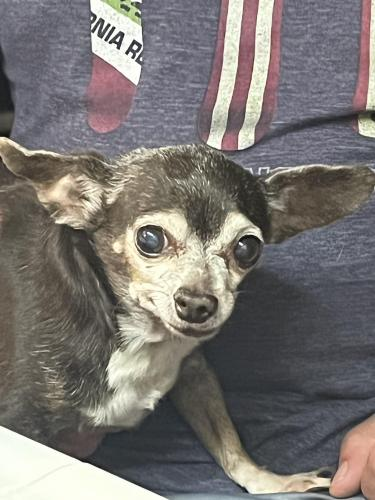 Lost Female Dog last seen Ford Street and Eucalyptus Drive, Redlands, CA 92374