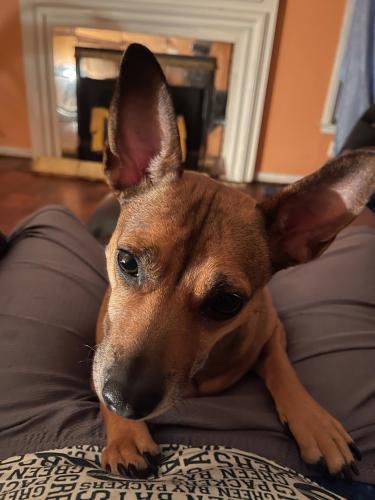 Lost Female Dog last seen Randol Mill & Alexis Avenue , Fort Worth, TX 76120