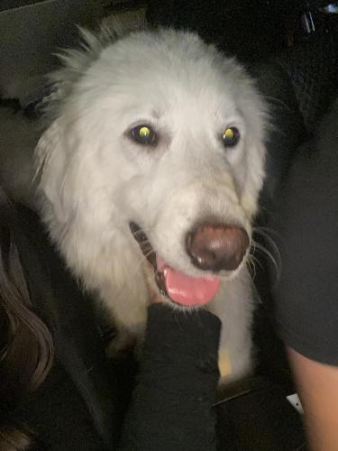 Found/Stray Female Dog last seen Bradley and polk  , Los Angeles, CA 91342