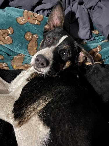 Found/Stray Male Dog last seen Lincoln and Robin Dr. Lake Elsinore. He was sitting at our front door when we got  from work. Scared, cold and wet :( , Lake Elsinore, CA 92530