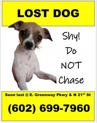 Lost Female Dog last seen N 21st St, Phoenix, AZ 85022