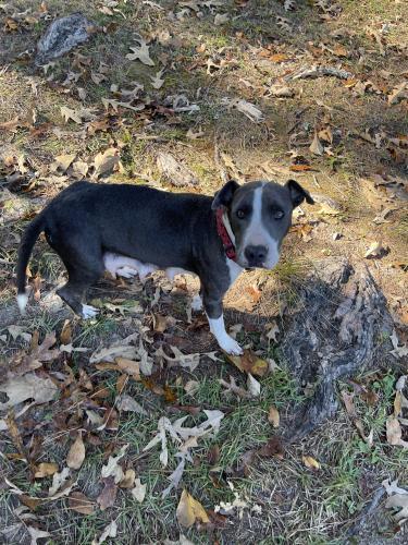 Found/Stray Female Dog last seen Johnsonville, SC, Williamsburg County, SC 29555