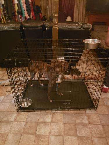 Lost Male Dog last seen Breaux Bridge, Breaux Bridge, LA 70517