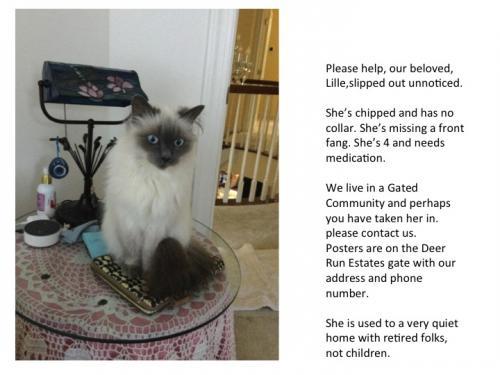 Lost Female Cat last seen Church Road and Oak Grove, Upper Marlboro, MD 20774