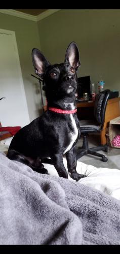 Lost Male Dog last seen Near Bergeron Rigs Rd, Breaux Bridge, LA, Breaux Bridge, LA 70517