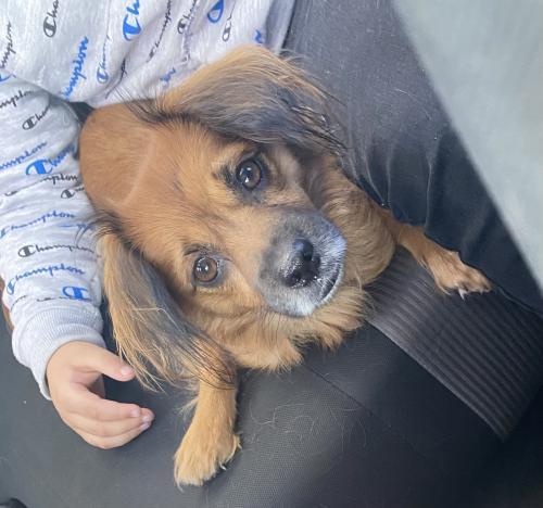 Found/Stray Female Dog last seen Near McDonald's , Glendale, AZ 85301