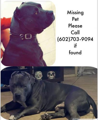 Lost Male Dog last seen 9th st and Euclid, Phoenix, AZ 85042