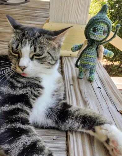 Lost Female Cat last seen Barr & Rawl Road, Lexington County, SC 29072