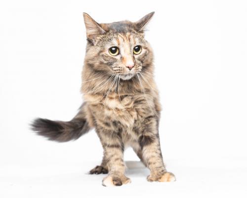 Lost Female Cat last seen Portside apmts , Sheffield Lake, OH 44054