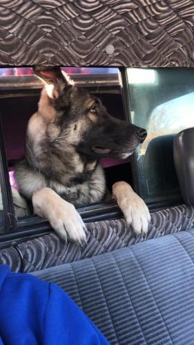 Lost Male Dog last seen Near Richardson rd, Apex, NC 27502