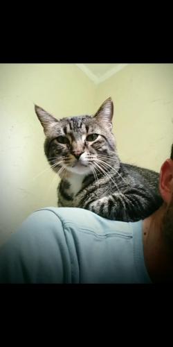 Lost Male Cat last seen Robley dr, Lafayette, LA 70503