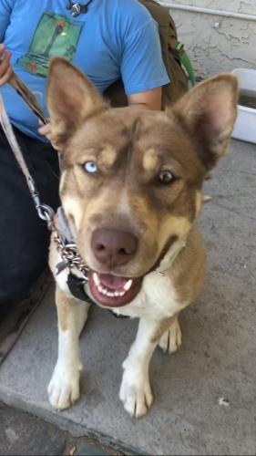 Found/Stray Female Dog last seen Near W Broadway Rd Unit 116 Tempe, AZ  85282 United States, Tempe, AZ 85282