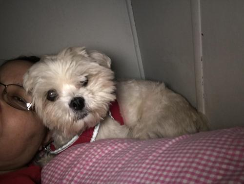 Lost Female Dog last seen 28th ave and Lawrence , Phoenix, AZ 85051