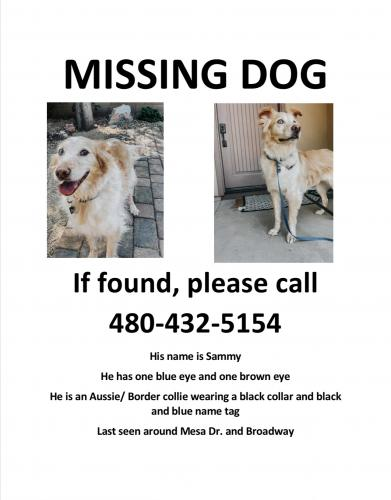Lost Male Dog last seen Broadway and Mesa dr, Mesa, AZ 85210