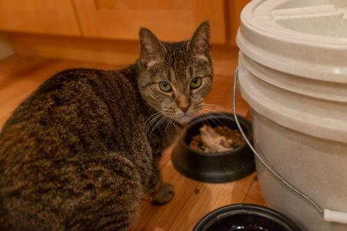 Lost Female Cat last seen Mockingbird Hill Lane and Almaden Rd, San Jose, CA 95120