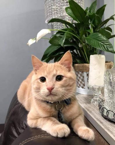 Lost Male Cat last seen Mallard dr, Prince George's County, MD 20708