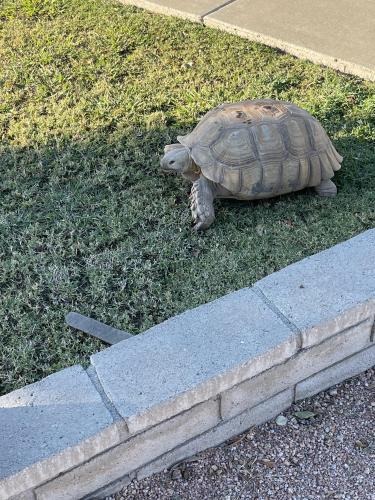 Found/Stray Unknown Reptile last seen Near drive and Villa Theresa, Phoenix, AZ 85053