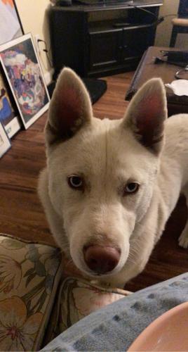 Found/Stray Female Dog last seen parmer avenue and san antonio, San Jose, CA 95116
