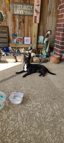 Found/Stray Male Dog last seen West Rd., Houston, TX 77064