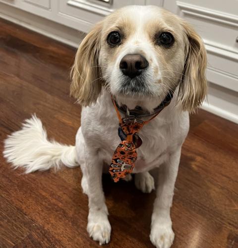Lost Male Dog last seen Pine st & Parkinson ave, Palo Alto, CA 94301