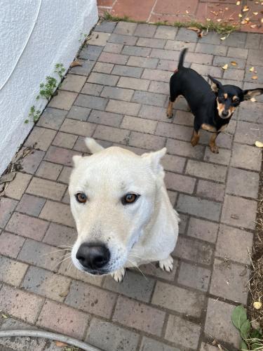 Found/Stray Unknown Dog last seen By All Saints Church, Hayward, CA 94541