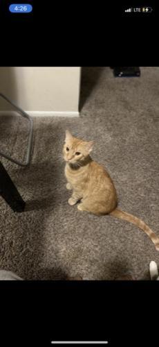 Lost Male Cat last seen Germantown , Germantown, MD 20876