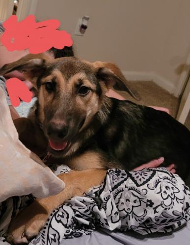 Found/Stray Female Dog last seen Lockshine valley ln, Spring, TX 77373