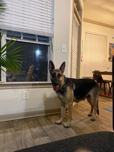 Found/Stray Female Dog last seen Near w sam Houston Pkwy S Houston TX, Houston, TX 77042