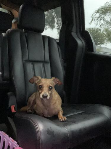 Found/Stray Male Dog last seen Cairnleigh dr. and Great Glen dr., Houston, TX 77084